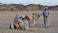 بحث عن خصائص السكان فى البيئة الصحراوية