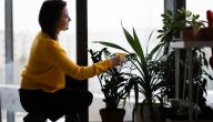 طرق العناية بالنباتات المنزلية