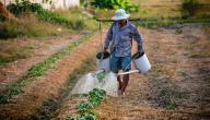 شرح مصطلح الزراعة المعاشية