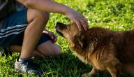 ما حكم لمس الكلاب