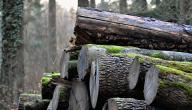 كيف نحافظ على الغابة