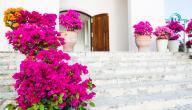 ما الفرق بين الوردة والزهرة