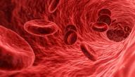 مكونات الدم عند الإنسان