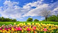 لماذا نحب فصل الربيع