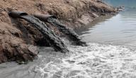 تعريف تلوث الماء