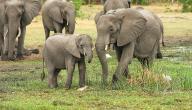ابن الفيل