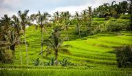 أفضل وقت للسفر إلى أندونيسيا
