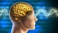 علاج لتقوية الذاكرة