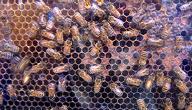 كيفية صنع العسل