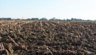 حل مشكلة ملوحة التربة