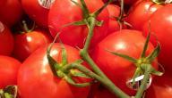 ما أصل كلمة طماطم