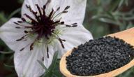 كيفية زراعة حبة البركة