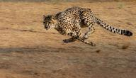 أسرع الحيوانات