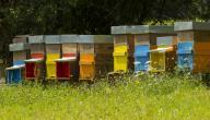 ما إسم بيت النحل