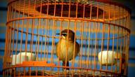 تربية الطيور في المنزل