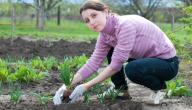 كيفية غرس النباتات