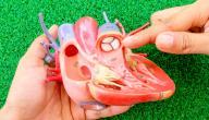 أنواع صمامات القلب