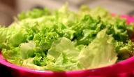 فوائد الخس للبشرة الدهنية