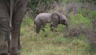 اسم ابن الفيل