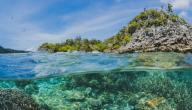 المحافظة على المحيط