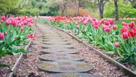 أبيات في وصف الربيع