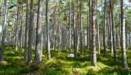 أهمية الغابات وفوائدها