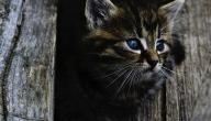 حلم القطة