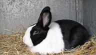 التخلص من رائحة بول الأرانب