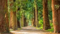 المحافظة على الأشجار