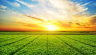 أهمية الشمس للكائنات الحية