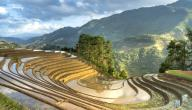 أهم الدول المنتجة للأرز