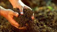 كيفية تحسين مردودية التربة