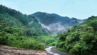أهمية الغابة في حياة الإنسان
