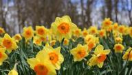 أجمل الزهور في العالم