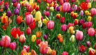 أجمل ما قيل في الربيع