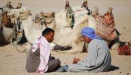 أشعار العرب في الحكمة
