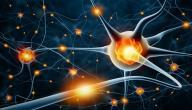 كم عدد الخلايا العصبية في جسم الإنسان