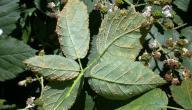 ما هي فطريات النباتات