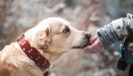 أهمية الرفق بالحيوان