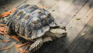 تربية السلاحف