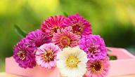 أنواع زهور الزينة
