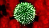 التهاب الدم البكتيري