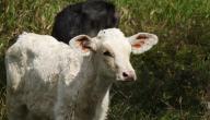 ابن البقرة