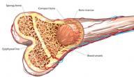 أعراض مرض سرطان نقي العظام