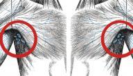 التهاب الغدد اللمفاوية في الإبط