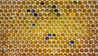 ماسك شمع العسل للبشرة