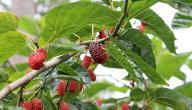 أسرع أشجار الفاكهة نمواً