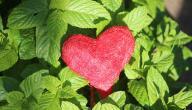 أجمل الكلمات المعبرة عن الحب