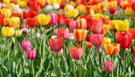 أجمل زهور العالم