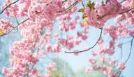 حكم عن فصل الربيع